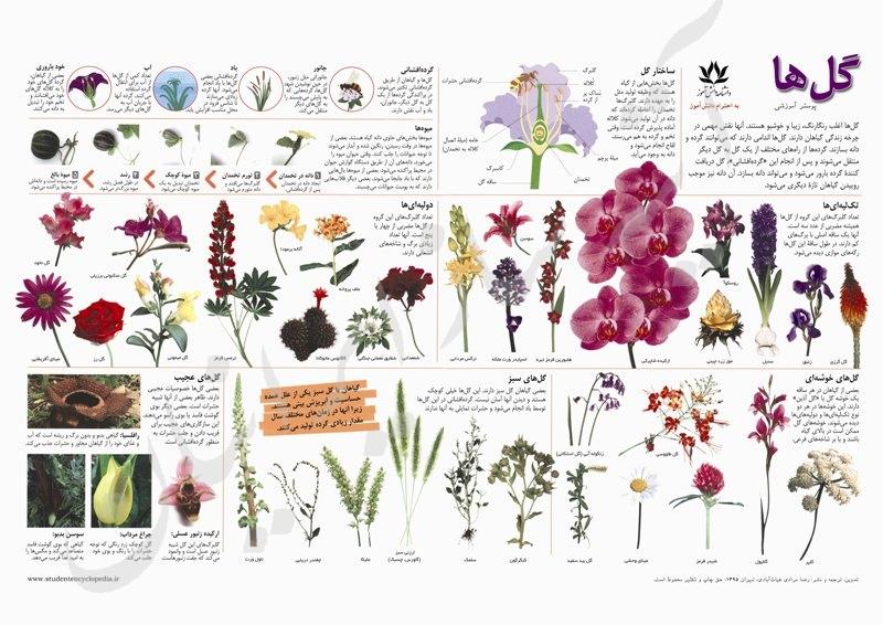 پوستر گل ها