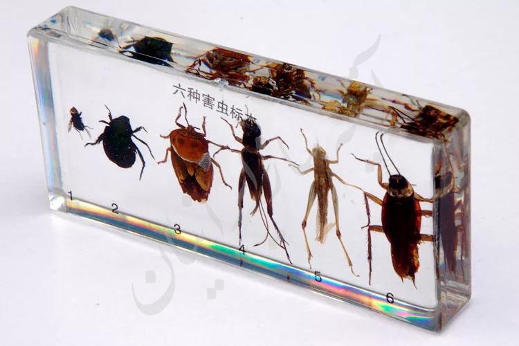 آشنایی با موجودات زنده حشرات