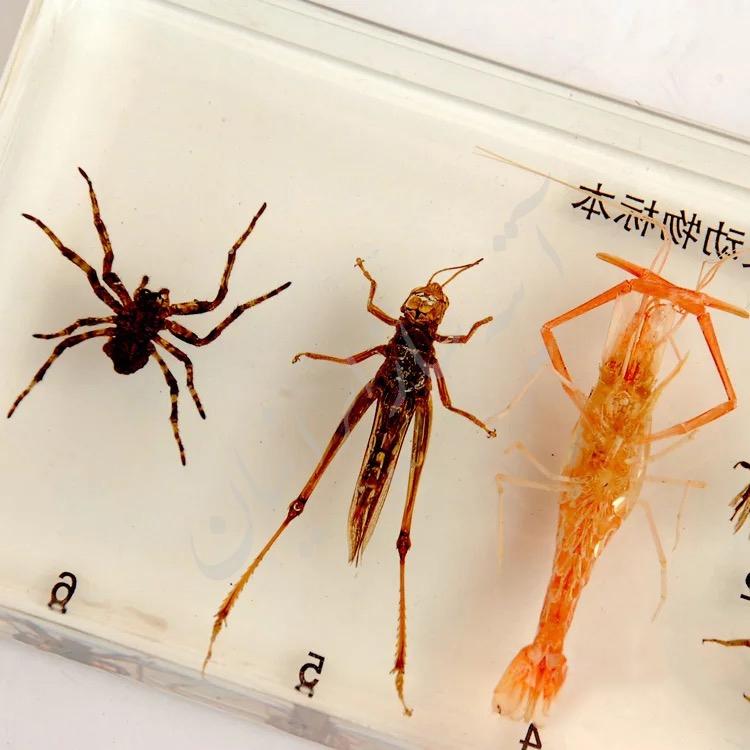 آشنایی با موجودات حشرات