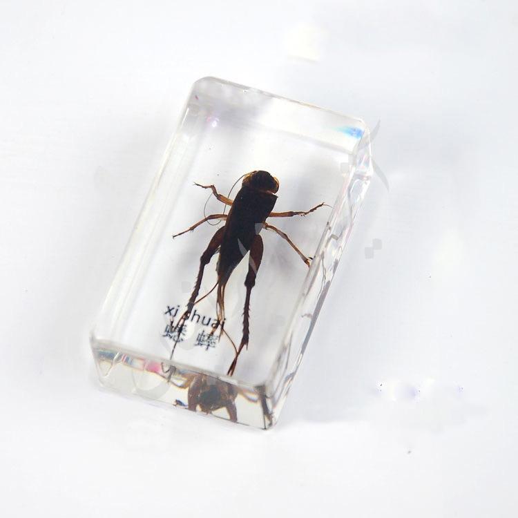 آشنایی با حیوانات حشرات