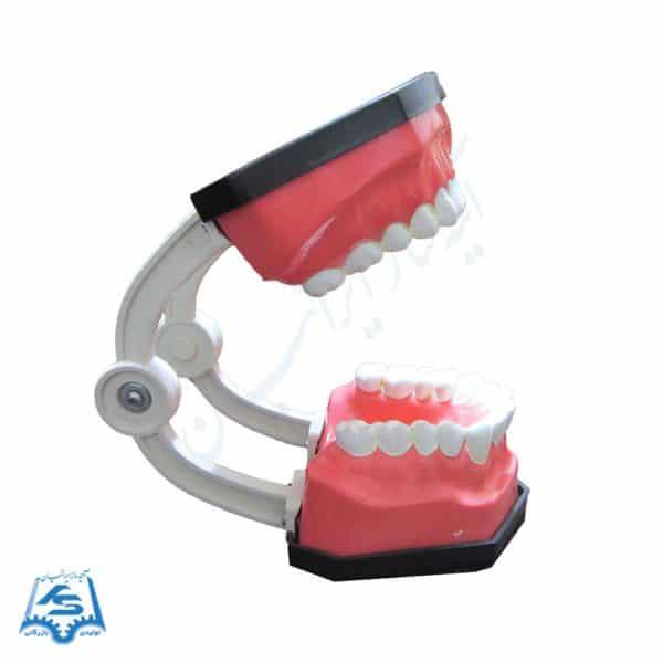 مولاژ دندان آموزش مسواک