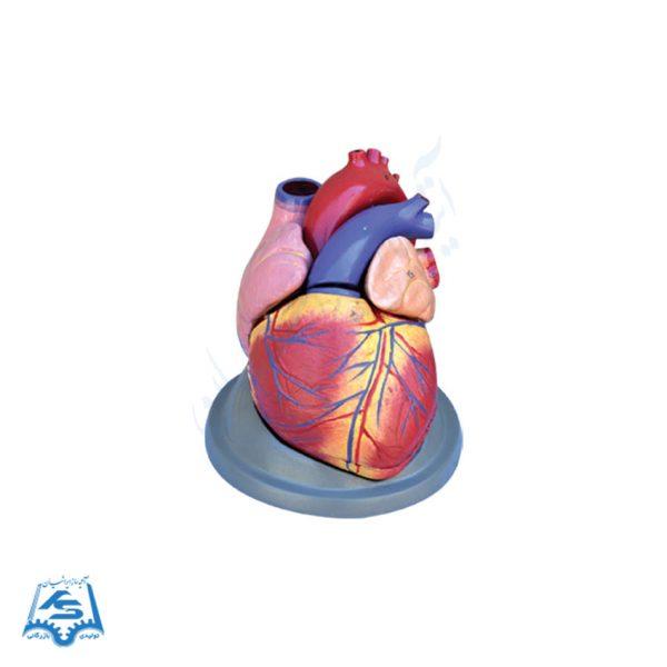 مولاژ قلب (6 قسمتی)