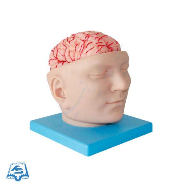 مولاژ سر با نمایش مغز