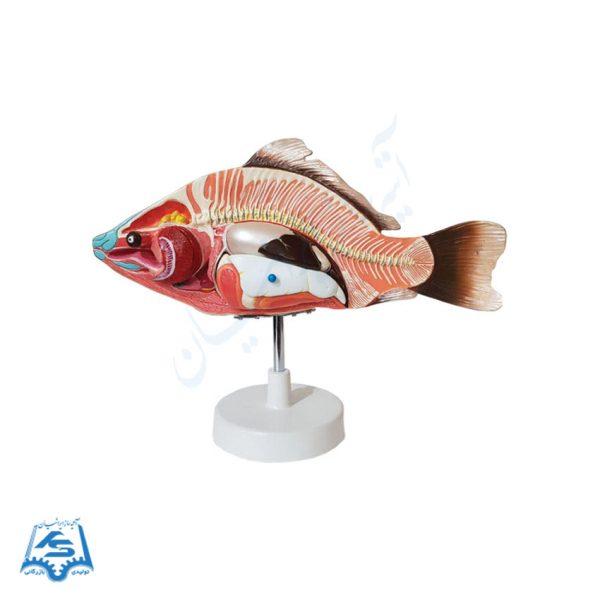 مولاژ ماهی