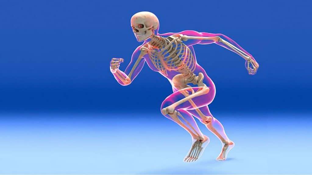 سیستم اسکلتی انسان