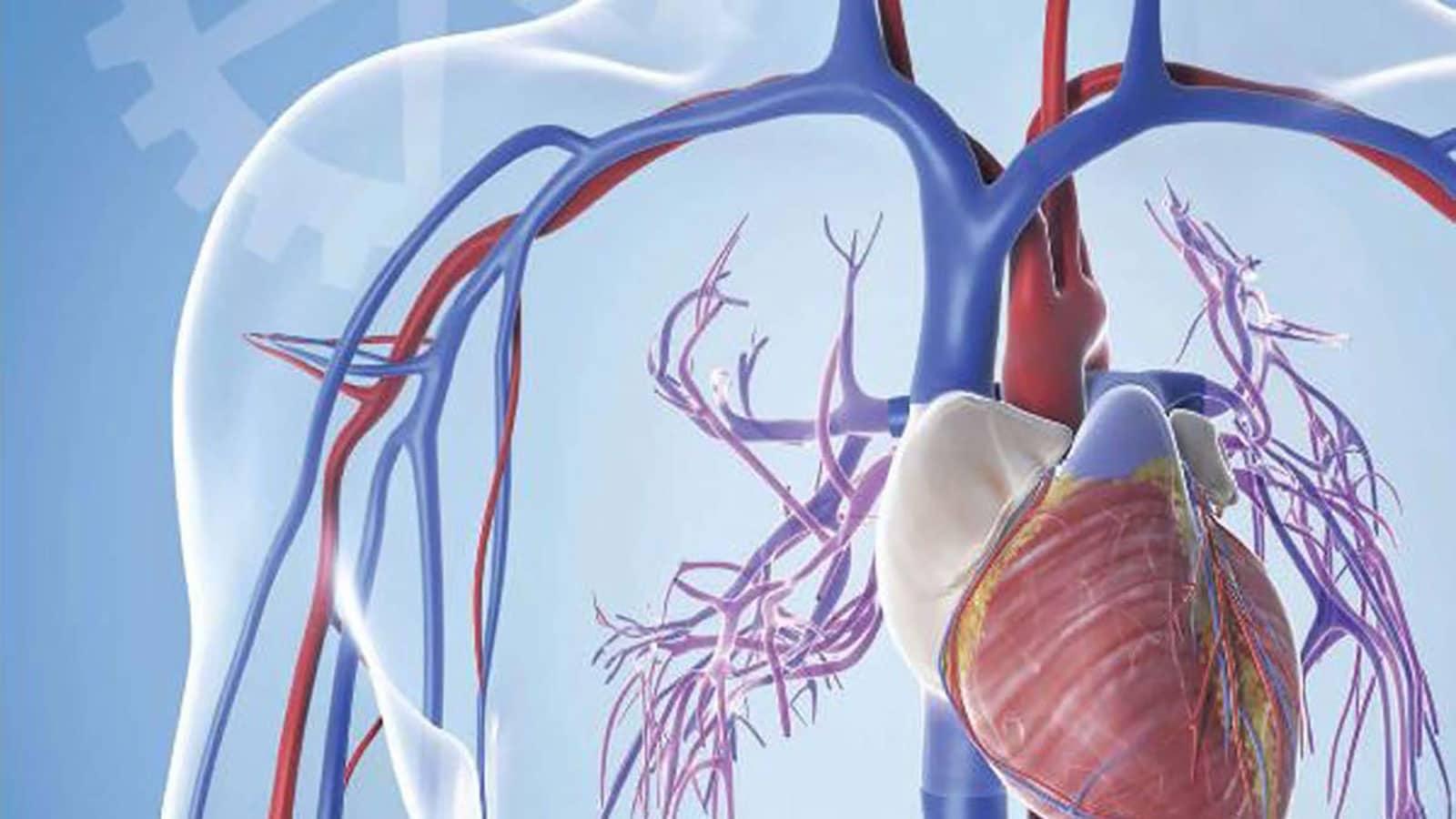 سیستم گردش خون